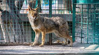 Kabul Zoo>