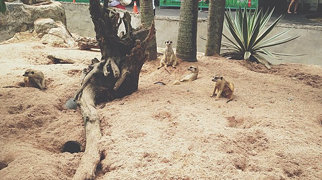 Khao Kheow Open Zoo>