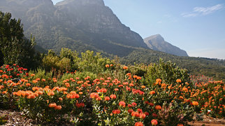 Kirstenbosch National Botanical Garden>