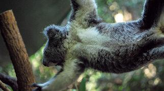 Koala Park Sanctuary>