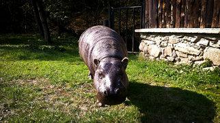 Košice Zoo>