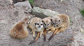 Krakow zoo>