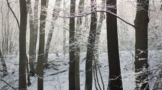 Kunratický les>