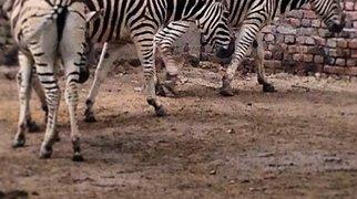 Lahore Zoo>