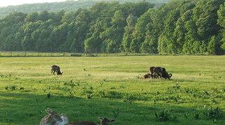 Lainzer Tiergarten>