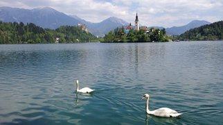 Lake Bled>