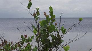 Lake Piso>
