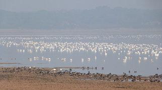 Lake Poyang>