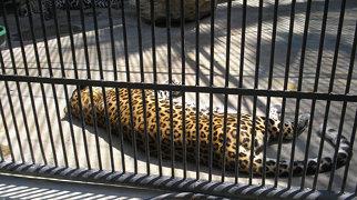 Limassol Zoo>