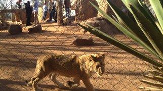 Lion Park>