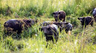 Lopé National Park>