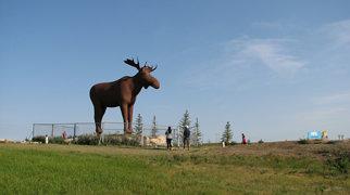 Mac the Moose>