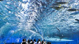 Manila Ocean Park>