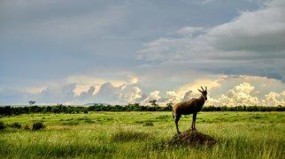 Masai Mara>