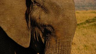 Masai Mara vildtreservat>