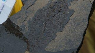 Πεδίο Απολιθωμάτων Μέσσελ>
