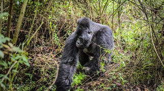 Mgahinga Gorilla National Park>