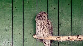 Minsk Zoo>