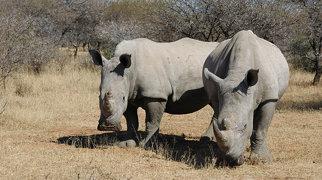 Mokolodi Nature Reserve>
