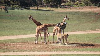 Monarto Zoo>