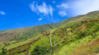Mount Cameroon>