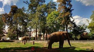 "Municipal Zoological Park ""Quinzinho de Barros"">"
