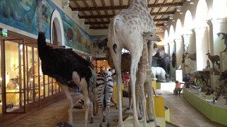 Muséum d'histoire naturelle de Marseille>