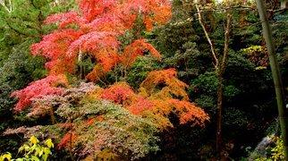 Nagashino Castle>