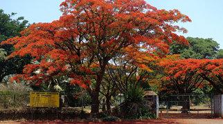 National Botanic Garden (Zimbabwe)>