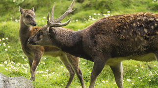 Newquay Zoo>