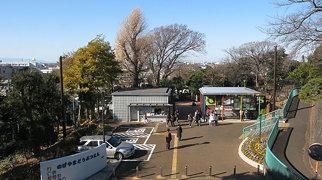 Nogeyama Zoo>