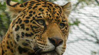 Nyíregyháza Zoo>