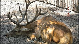 Parque zoológico de Odesa>