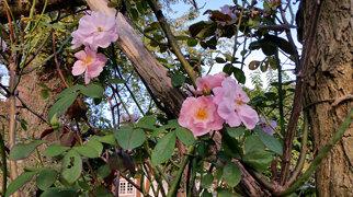 Old Westbury Gardens>