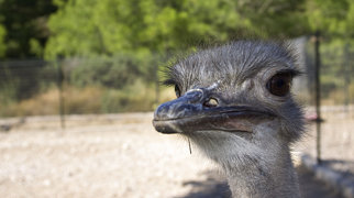 Ostrich Farm & Park>