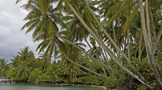 Palmyra Atoll>