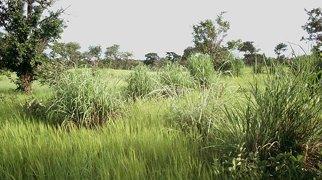 Pama Reserve>