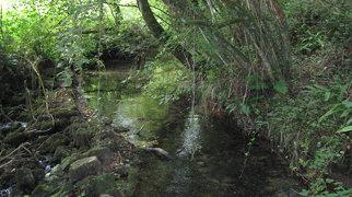 Parc Cwm long cairn>