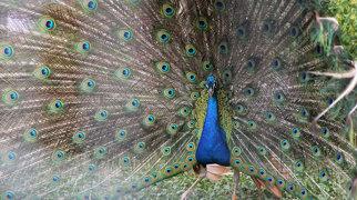 Парк птиц >