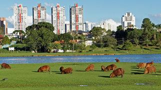 Parque Barigui>