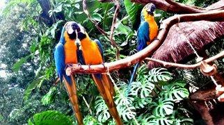 Parque das Aves>