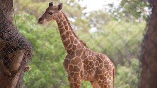 Perth Zoo>
