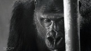 Philadelphia Zoo>