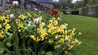 Pitmedden Garden>