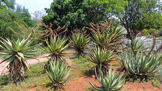 Pretoria National Botanical Garden>