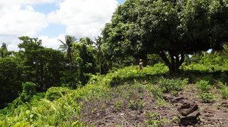 Pulemelei Mound>