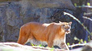 Queens Zoo>