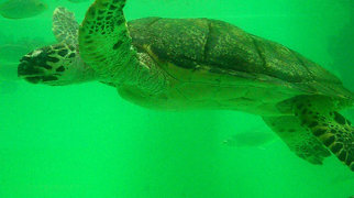Rayong Aquarium>