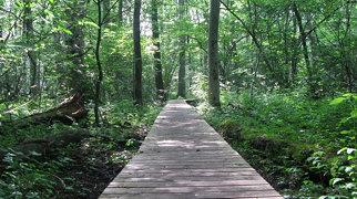 Rya skog>