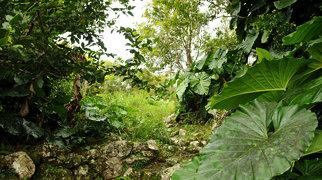 Saba (wyspa)>